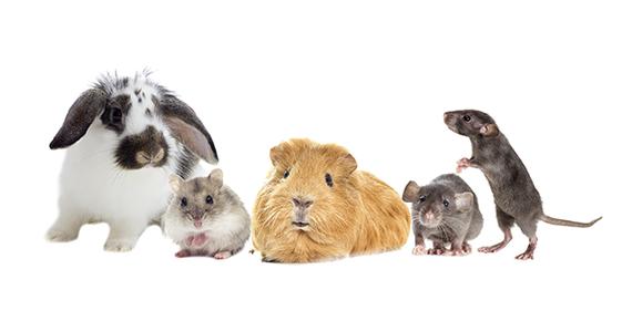 Cancer in Pocket Pets