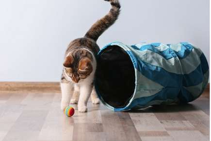 Create an Environment Your Cat Will Love