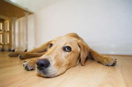 Does Your Dog Suffer From Anxiety?