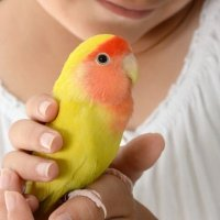 Family Friends Aren't Always Furry – Think of Feathery Friends!
