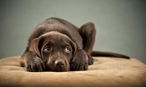 Gastroenteritis in Pets