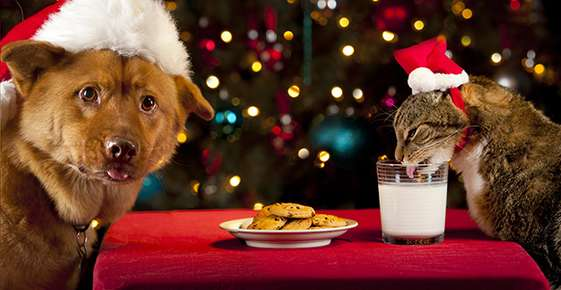 Holiday Hazards for Pets