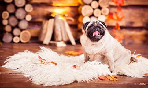 Keep Your Pets Calm During the Holiday Season with These Tips