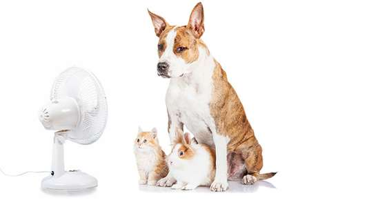 Keeping Pets Cool This Summer