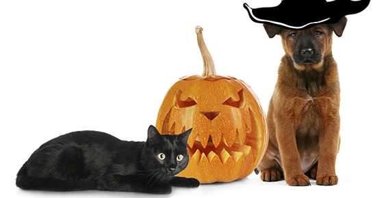 Prepare Your Pets for Halloween