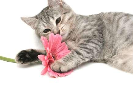 Seasonal Allergies Can Make Your Pet Miserable