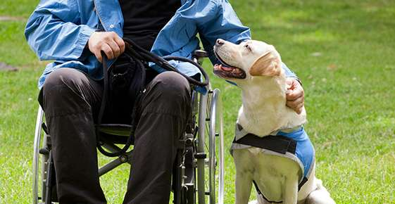 Assistance Dogs Offer Many Benefits