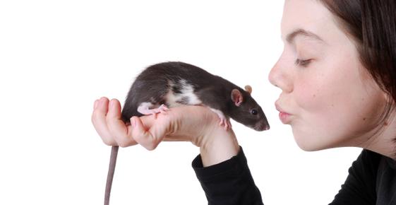 At Risk for Rat Bite Fever?