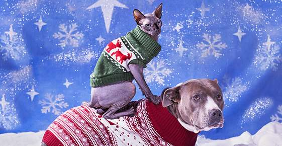 Preparing Your Pet for the Winter