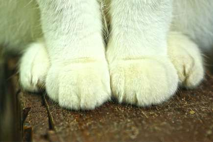 Trimming Your Cat's Claws